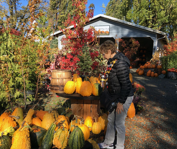 MCGC's Judy Morrier searched for the perfect pumpkin at Gordon's Skagit Farm. Photo courtesy of Mill Creek Garden Club.