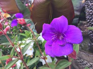 Are you a princess? Do you need a princess flower?  Photo courtesy of Sunnyside Nursery.