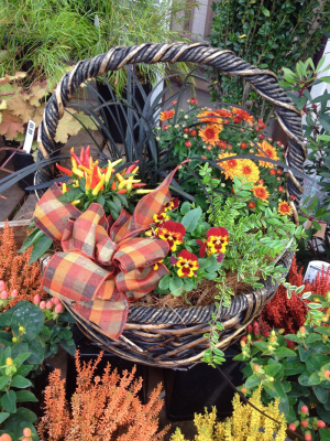 Fall is for planting. Photo courtesy of Sunnyside Nursery.