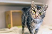 Meet Bonnie Winterbottom at Seattle Humane today! Photo courtesy of Seattle Humane.