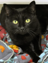 Layla is about three years in age and she was transferred in from the Ellensburg area