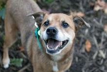 This sweet girl loves a good long walk followed by a cuddle. Photo courtesy of Seattle Humane.