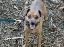 Lucy is a super sweet girl with a big heart.  Photo courtesy of Seattle Humane.