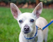 Meet Marshmello at Homeward Pet today! Photo courtesy of Homeward Pet.