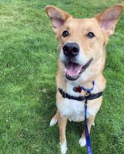 Our dog of the week Maxwell has a big love – and that's for humans! Maxwell adores people and is happy to make new friends any day of the week, any time of the day, and any season of the year. He greets everyone with a giant smile and immediately puts everyone into a happy frame of mind.