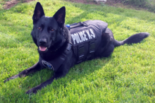 The Mill Creek Police Department 's Police Service Dog Rasko will be receiving a bullet and stab protective vest thanks to the efforts of Vested Interest in K9s, Inc., a Massachusetts based non-profit organization and the Hausman Family Foundation of Orange, California.