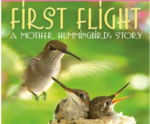 "The Adopt A Stream Foundation and Snohomish County Parks and Recreation are presenting ""First Flight: A Mother Hummingbird's Story"" at the Northwest Stream Center in Snohomish County's Mc Collum Park on Friday, February 13, 2015, at 7 pm."